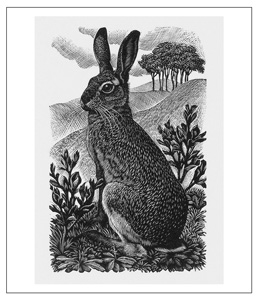 Hare Puns by Orange County Headshots
